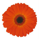 Orange Flower Wedding Decor