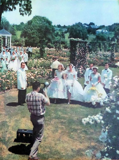 1955 Rose Garden Wedding a bride and bridal party approach groom in white tux coat while guests look on and a photographer photographs them. Smiles all around!